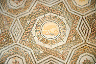 Roman geometric mosaic composed of stars and octagonal medellions with birds in them. Late 3rd century AD, Thurbo Majus. Roman mosaics from the north African Roman province of Africanus . Bardo Museum, Tunis, Tunisia. .<br /> <br /> If you prefer to buy from our ALAMY PHOTO LIBRARY  Collection visit : https://www.alamy.com/portfolio/paul-williams-funkystock/roman-mosaic.html - Type -   Bardo    - into the LOWER SEARCH WITHIN GALLERY box. Refine search by adding background colour, place, museum etc<br /> <br /> Visit our ROMAN MOSAIC PHOTO COLLECTIONS for more photos to download  as wall art prints https://funkystock.photoshelter.com/gallery-collection/Roman-Mosaics-Art-Pictures-Images/C0000LcfNel7FpLI
