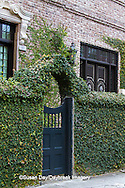 66512-00114 Blue gate in ivy-covered fence, Charleston, SC