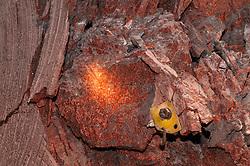 Safety bolt in Boulby Potash mine