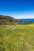 View from the Pelican Bay trail, Santa Cruz Island, Channel Islands National Park, California USA