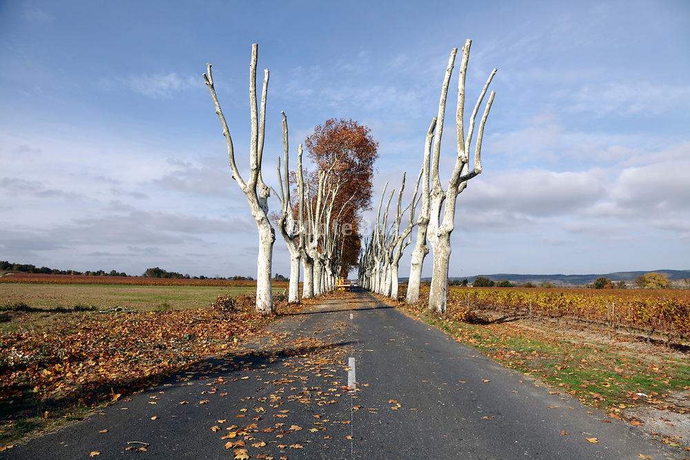 rural countryside road with trees being pruned France Languedoc