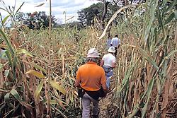 Earthwatchers Walking Through Field