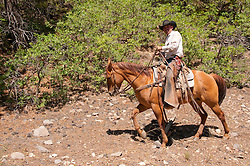 USA, Utah, horseback ride in Escalante with wranglers Jamie Barnson and Cash Barnson through ponderosa pine forest up steep trail to Aquarius Plateau. Model Released MR.