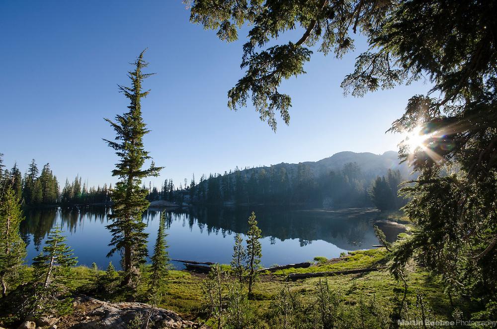 Early morning sun through trees, Bull Run Lake, Carson-Iceberg Wilderness, Stanislaus National Forest, California