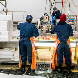 Cod being processed at Red's Best at the Boston Fish Pier in Boston, Massachusetts.