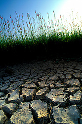 Close Up of Dry, Cracked Soil and Grass on Texas Coast