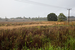 An untended field is pictured close to a site where tree surgeons are working with the National Eviction Team on behalf of HS2 Ltd to fell a 200-year-old oak tree alongside the East West Rail route known locally as the '7 Sisters Oak' as part of works connected to the HS2 high-speed rail link on 23 September 2020 in Steeple Claydon, United Kingdom. There is huge impact on local agriculture in areas close to the HS2 high-speed rail link, with some farmers reported to have been refused permission to tend their crops.