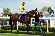 Autumn Splendour ridden by Rob Hornby and trained by Milton Bradley in the Value Rater Racing Club Is Free Handicap race.  - Mandatory by-line: Ryan Hiscott/JMP - 01/05/2019 - HORSE RACING - Bath Racecourse - Bath, England - Wednesday 1 May 2019 Race Meeting