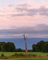 https://Duncan.co/pastel-skies-and-dead-tree
