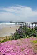 Scripps Institution Of Oceanography, La Jolla, California (SD)