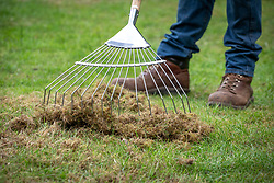 Raking out moss and dead grass from a lawn with a tine rake