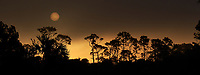 Sun rising over the trees in the early morning fog. Merritt Island National Wildlife Refuge. Image taken with a Fuji X-T2 camera and 100-400 OIS lens (ISO 200, 100 mm, f/7, 1/1700 sec).