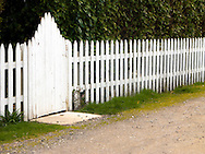 white picket fence and gate with a large evergreen hedge behind it.  Lone Rock area Seabeck, Washington state, USA.