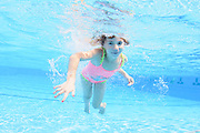 Young girl holds her breath while floating underwater