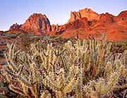 Buckhorn Cholla and the Turtle Mountains at Dawn, Turtle Mountains Wilderness, California