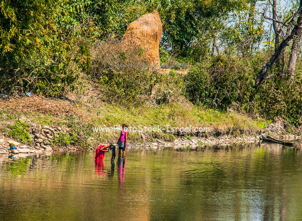 bathing and washing in the river. Photographed in Chitwan national park, Nepal