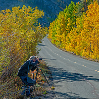 A photographer shoots fall-colored aspens along Bishop Creek Road in the Eastern Sierra Nevada near Bishop, California.