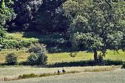 Nederland, Ubbergen, 28-6-2019Wandelaars, een oudere man en vrouw, lopen door de Elysese velden, onderdeel van de stuwwal in het Rijk van Nijmegen . Foto: Flip Franssen