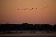 Aquidauana_MS, Brasil...Silhueta de passaros em uma paisagem na fazenda Rio Negro no Pantanal...The birds silhouette in a landscape in Rio Negro farm in Pantanal...Foto: JOAO MARCOS ROSA / NITRO