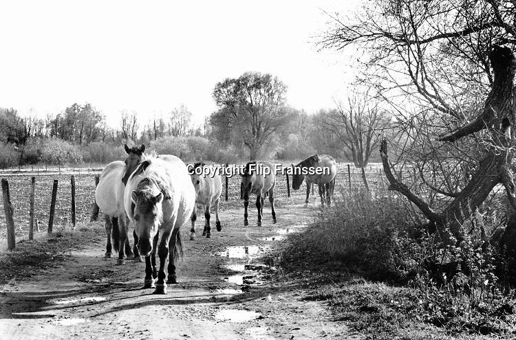 Nederland, Millingerwaard, 15-4-1992Een konikpaard ontmoet een recreant in het natuurgebied. wilde paarden. Het is de eerste generatie paarden die hier uitgezet zijn om het gebied te begrazen .  Grote Grazers . Gelderse Poort. Recreatie . Foto: Flip Franssen
