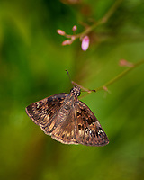 Butterfly. Sourland Mountain Preserve. Image taken with a Nikon D800 camera and 300 mm f/2.8 lens (ISO 100, 300 mm, f/2.8, 1/2000 sec).