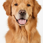 20130627 Goldens for Mike