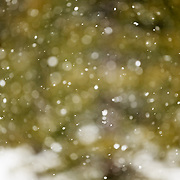 Abstract of snow falling in a forest in the backcountry of Wyoming.