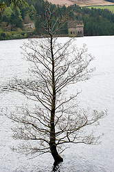 Derwent Dam in the Peak National Park overflows leaving a tree, normally on the bank of the dam pop growing stright out of the water, as part of of Britain still have a hosepipe ban in place despite the possibility that April 2012 could be the wettest in 250 years..27 April 2012 .Image © Paul David Drabble