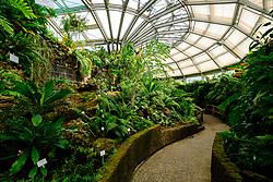 Many varieties of fern in greenhouse at Berlin Botanical Garden in Dahlem, Berlin, Germany