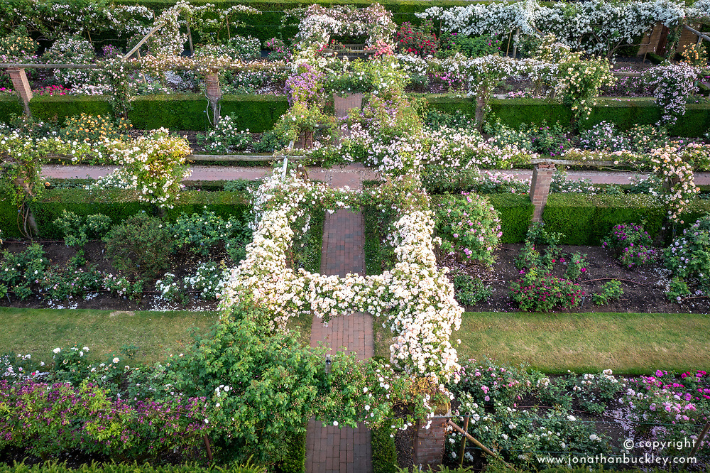 Aerial view of The Long Garden at The David Austin Rose Gardens