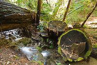 A stream flows across the Pine Ridge Trail next to moss rimmed redwood stumps, Big Sur, California.