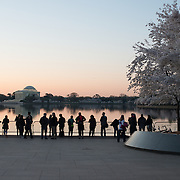 Photographers and other visitors line up along the waterfront before dawn to watch the sunrise over the Tidal Basin Washington DC. This is during the blooming of the famous cherry blossoms (at right), with the Jefferson Memorial in the distance.