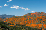 Photos from super bloom 2019 trip with A rainy winter brought an exceptional display of flowers now dubbed 'Super bloom 2019' in Southern California. The California poppies at Lake Elsinore in Walker Canyon give a spectacular show drawing huge crowds and causing people to pull along the freeway to take photos. The poppies covered the hillsides along I-15 in a jaw-dropped orange explosion.