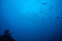 Rebreather divers filming schooling Hammerhead Sharks<br /> <br /> <br /> Shot at Cocos Island, Costa Rica