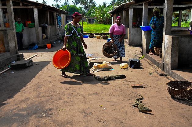 Nigeria - Female fishmongers find monitor lizards on site