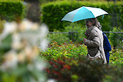 © Licensed to London News Pictures. 07/06/2013. Wisley, UK Women walk in a sharp rain shower. People enjoy the warm weather at RHS Wisley in Surrey today 7th June 2013. Photo credit : Stephen Simpson/LNP