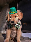 You'd have to be blind not to love this cute golden retriever puppy<br /> <br /> Ray Charles is the Internet's new favorite dog - a blind golden retriever puppy recently discovered by Buzzfeed.<br /> The original story about Ray on Buzzfeed, posted last week, has now Born this past December, Ray was the only boy in the litter with four lively sisters. <br /> At first, Ray seemed more timid than his sisters which led a vet to eventually discover that Ray was blind. <br /> But he insists on his Facebook page that that's no reason to feel sorry for him. <br /> 'I can run and play and do everything else other dogs that can see do!' Ray 'says' on his Facebook page.<br /> His blindness, however, was a bad omen at first since blind dogs have a much harder time finding the right family for adoption.<br /> 'My life then became a waiting game as to if I was ever going to find a home or not,' Ray's Facebook page says. <br /> 'Luckily my dad found out about me before it was too late, and saved my life!'<br /> Ray now lives in Boston with two big brothers and a big sister, the family's other dogs Harley, Jack, and Maggie. <br /> In March, Ray got his own Facebook page, which his owners use to post pictures of Ray dressed up in silly outfits, taking baths and playing with toys.<br /> Since the page was created, the internet has fallen in love with the sightless dog - he has over 6,500 likes.<br /> Love for Ray spread off Facebook where he was voted a  'dog of the week' at Modern Dog Magazine's website last month with over 3,000 votes. <br /> Hometown fans in Boston have created a petition on ipetitions.com vying to give Ray the chance to drop the puck at a Bruins hockey game. <br /> 'Ray Charles may not have his sight, but we can still show him how much he means to all of us!' reads the petition.<br /> And despite of all the attention, Ray seems to have remained relatively grounded despite his meteoric rise. According to Facebook, he  just loves 'to make people happy and smile and bring joy to everyone around me!'<br /> ©Ray Charles/Exclusivepix