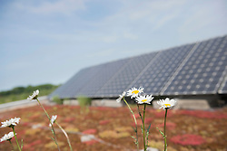 Wild flowers in front of solar panel