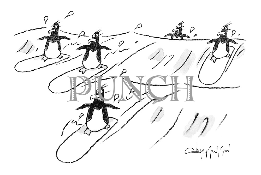 (Surfboarding penguins)