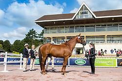 Anthea Gunner Dixon, (NZL), Doncartier - Horse Inspection Para Dressage - Alltech FEI World Equestrian Games™ 2014 - Normandy, France.<br /> © Hippo Foto Team - Jon Stroud<br /> 25/06/14