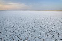 Patterns of cracked mud on dry lakebed of Harney Lake, Malheur National Wildlife Refuge, Oregon