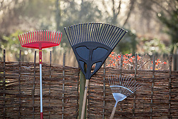 Different types of rakes leaning against a fence