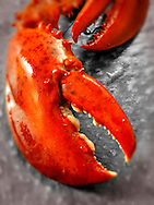 Fresh cooked whole lobster claws