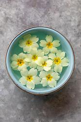 Primula vulgaris - Primrose