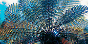 Photo art Bromeliad fern design