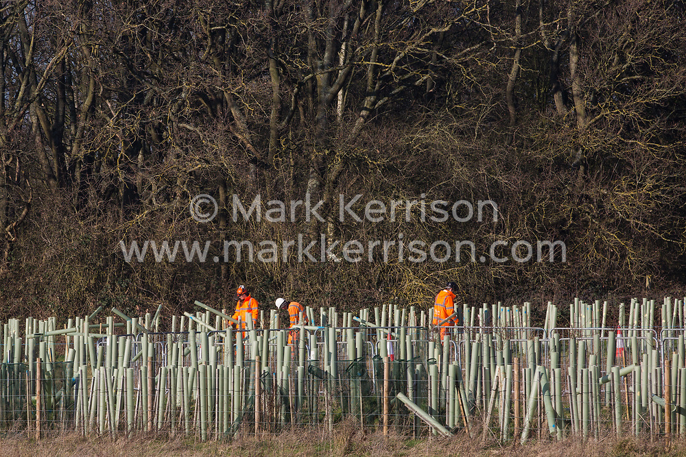 Harefield, UK. 21 January, 2020. HS2 workers inspect saplings planted as mitigation measures for the destruction of ancient woodland in the Colne Valley. Many of the saplings are reported to have died.108 ancient woodlands are set to be destroyed by HS2.