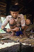 PENAN, MALAYSIA. Sarawak, Borneo, South East Asia. Penan making darts for blowpipe. Tropical rainforest and one of the world's richest, oldest eco-systems, flora and fauna, under threat from development, logging and deforestation. Home to indigenous Dayak native tribal peoples, farming by slash and burn cultivation, fishing and hunting wild boar. Home to the Penan, traditional nomadic hunter-gatherers, of whom only one thousand survive, eating roots, and hunting wild animals with blowpipes. Animists, Christians, they still practice traditional medicine from herbs and plants. Native people have mounted protests and blockades against logging concessions, many have been arrested and imprisoned.
