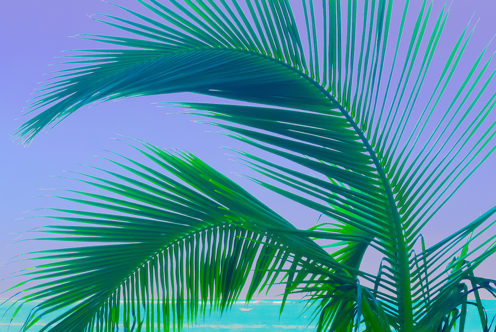 Photographic art design of a palm tree by the ocean in Hawaii