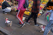 Passers-by walk their terriers by local grocer 'Bora & Sons', a fruit and veg retailer which displays its produce outside its high street business on Lordship Lane in East Dulwich, on 25th October 2021, in London, England.
