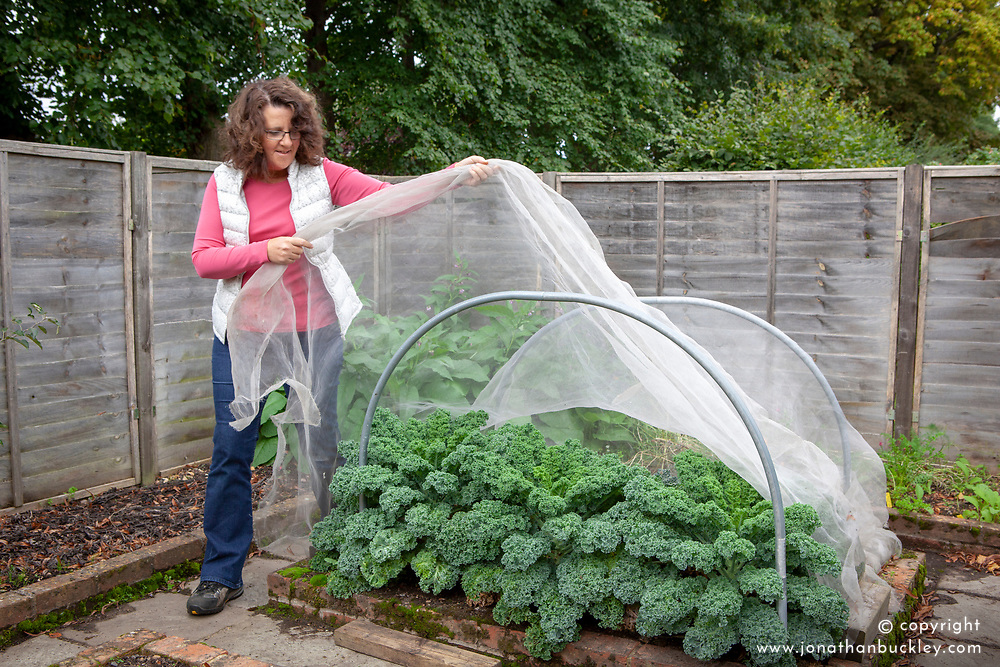 Protecting brassicas - kale - with horticultural netting.